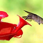 Summer Fun Hummingbird Art Print