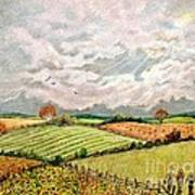 Summer Harvest Art Print by Marilyn Smith