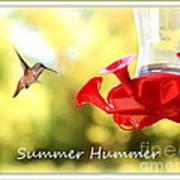 Summer Hummer Poster Art Print