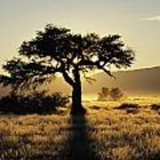 Sun Coming Up Behind A Tree In African Art Print