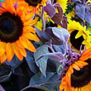 Sun Flower Sunday Art Print