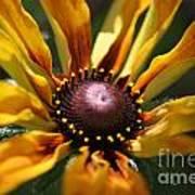 Sun On Flower Art Print by David Taylor