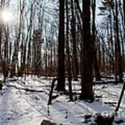 Sun On The Wild Turkey Trail Art Print