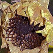 Sunflower 13 Art Print