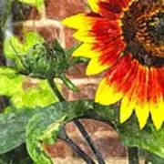 Sunflower 2 Sf2wc Art Print