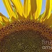 Sunflower Arch Art Print
