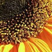 Sunflower Edge Art Print