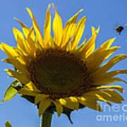 Sunflower For Snack Art Print