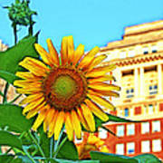 Sunflower In The City Art Print