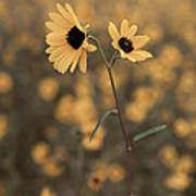 Sunflower In The Wild Art Print