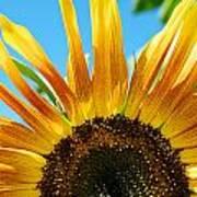 Sunflower Meets Sky Art Print