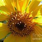 Sunflower No.15 Art Print