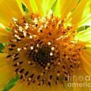 Sunflower No.16 Art Print