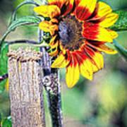 Sunflower On A Stick Art Print