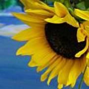 Sunflower One Art Print
