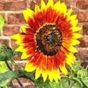 Sunflower Sfwc Art Print