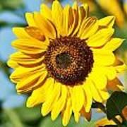 Sunflower Small File Art Print