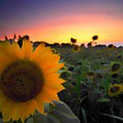 Sunflower Smoothie Art Print