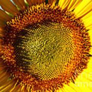 Sunflower Sunburst Art Print