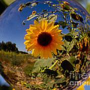 Sunflower Through A Glass Eye Art Print