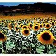 Sunflowers At Dusk Art Print