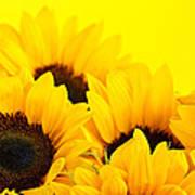 Sunflowers Print by Elena Elisseeva