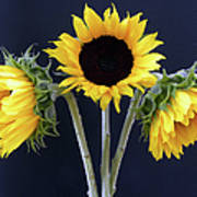 Sunflowers Three Art Print