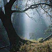 Sunlight Beams Through The Treetops Art Print