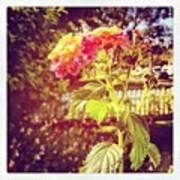#sunlight #beautiful #flower Art Print