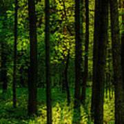 Sunlight In Forest Art Print