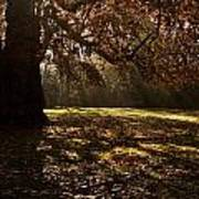 Sunlight In Trees Art Print