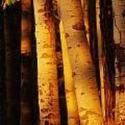Sunlight On Aspen Trees, Twin Falls Art Print