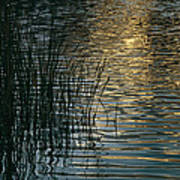 Sunlight Reflects On Rippled Water Art Print
