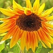 Sunny Bright Sunflower Art Print