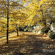 Sunny Day In The Autumn Park Art Print