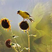 Sunny Finch Art Print