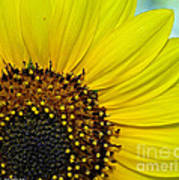 Sunny Summer Sunflower Art Print