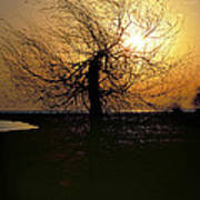 Sunrise And Tree Art Print