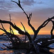 Sunrise At Driftwood Beach 5.2 Art Print