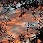 Sunrise Leaves Art Print