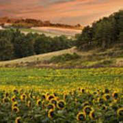 Sunrise Over Field Of Sunflowers Art Print