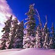 Sunrise Over Snow-covered Pine Trees Art Print