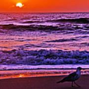 Sunrise Sea And Seagull Art Print