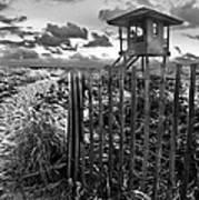 Sunrise Sentinel In Black And White Art Print