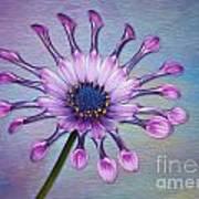 Sunscape Daisy Art Print