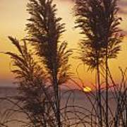 Sunset On The Mediterranean Sea And Plant Art Print