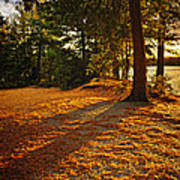 Sunset In Woods At Lake Shore Art Print