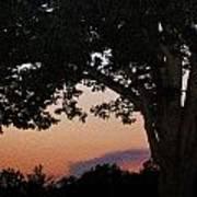 Sunset Over A Witness Tree Art Print