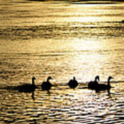 Sunset Over Canada Geese Art Print by Joseph Rossi