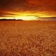 Sunset Over Wheat Field Art Print